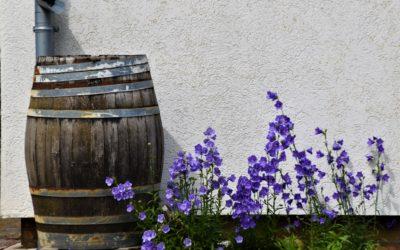Praktische tips voor het aanleggen van een gifvrije, duurzame tuin