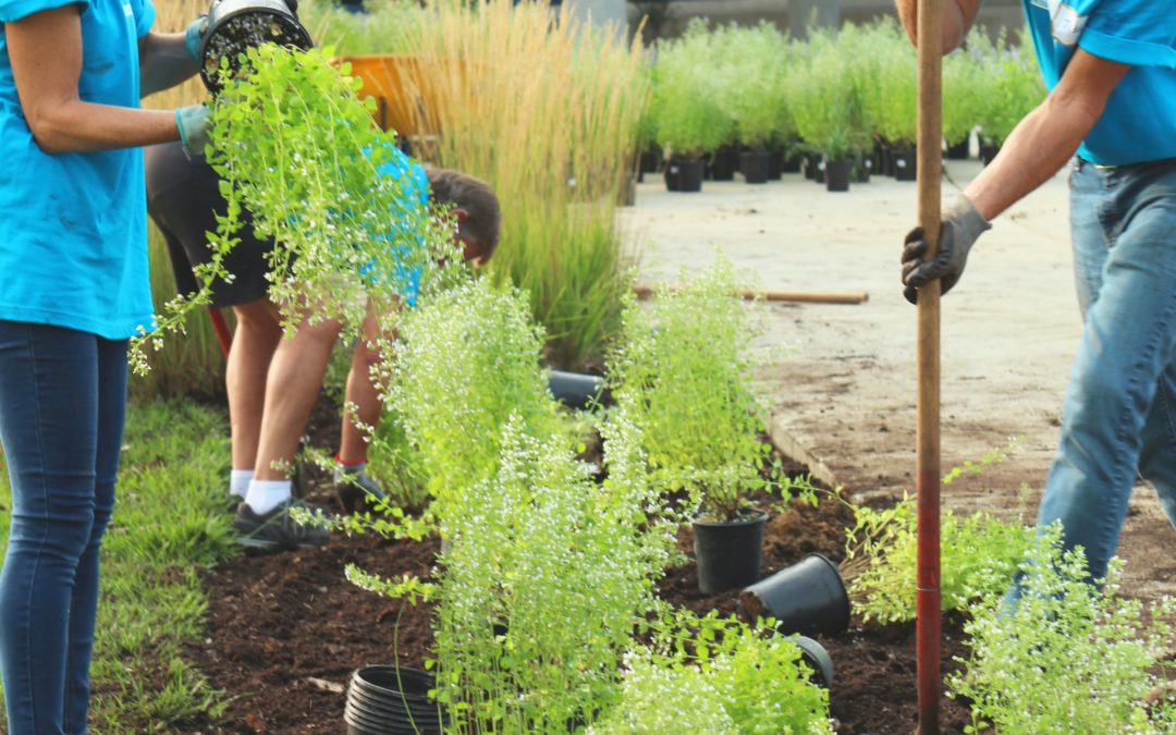 Subsidie voor particulieren die hun tuin en dak vergroenen